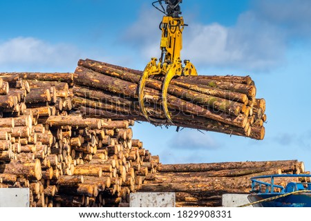 Timber export or import, loading on cargo ship in Wicklow commercial port or harbour in Ireland. Transport industry. Close up on wood logs gripple ストックフォト ©