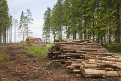 Timber Stack on clearcutting area