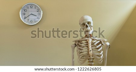 Time wait for no man.Panorama picture of upper part of human skeleton model on vintage background with wall clock shallow DOF