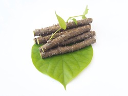 tinospora cordifolia or heart leaved moonseed with leaf use as ingredient in hair dandruff shampoo product to soothe itchy, flaky and irritated scalp and dry and is a medicine herb use for health care
