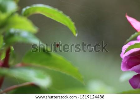 Tiny Arachnid on its Web #1319124488
