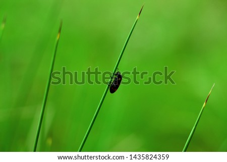 tiny bug on green grass #1435824359