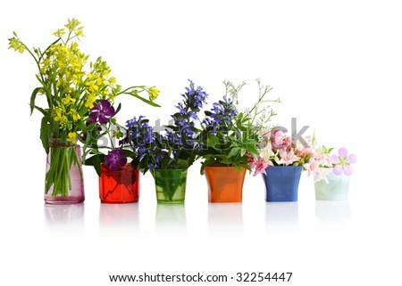Tiny flowers in different color in the cup