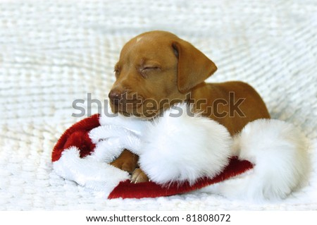 Tiny Golden Retriever puppy lays on his Santa Claus hat.  His eyes are closed and he is afraid he has been too bad for Santa to come visit him so one tiny tear squeezes from his eye.