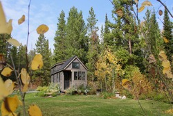 Tiny house in golden fall leaves