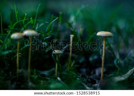 Tiny mushrooms growing in the ground. Mushroom, food, nature related picture.