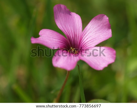Tiny pink flower from a weed in my lawn ez canvas tiny pink flower from a weed in my lawn mightylinksfo