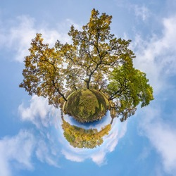tiny planet transformation of spherical panorama 360 degrees. Spherical abstract aerial view in oak grove with clumsy branches in gold autumn near river. Curvature of space.