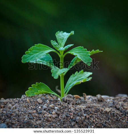 Tiny plant growing from soil with green out focus background