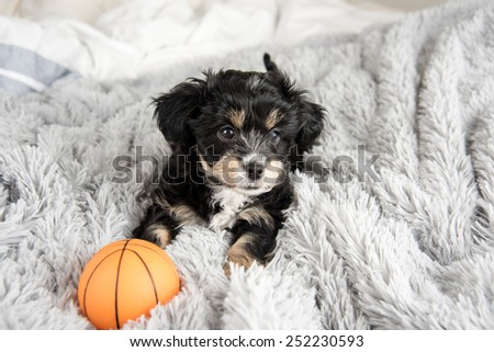 Tiny Puppy on Fluffy Blanket with Orange Basketball Toy