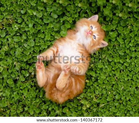 Tiny red kitten outdoors portrait. - stock photo