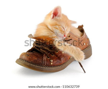 tiny red kitten sleeping in old boot