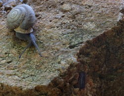 Tiny snails are crawling around on a rock looking for a place to hide.