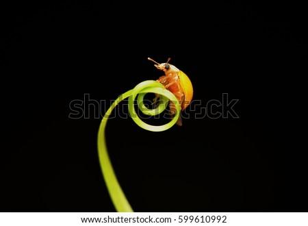 Tiny yellow bug #599610992