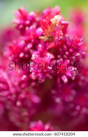 tip, botany, color flora magenta background beautiful #607418204