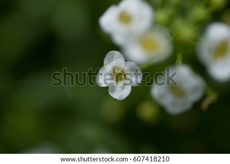 tip, botany, color flora magenta background beautiful #607418210