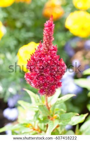 tip, botany, color flora magenta background beautiful #607418222