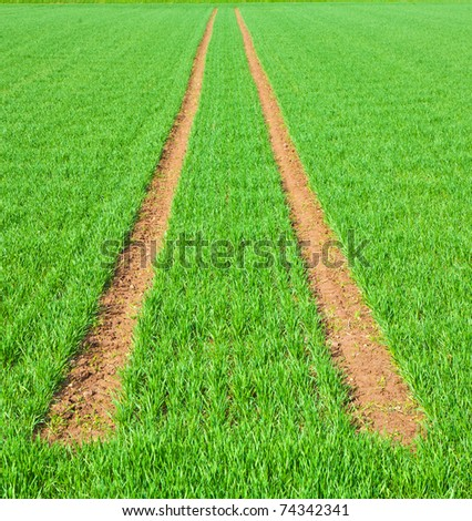 Tire Path In green Field in springtime