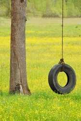 Tire swing hanging from a white oak tree in a field of yellow wildflowers and grass