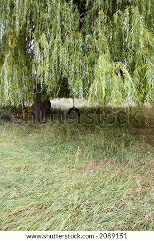 Tire swing hanging from a willow tree in the backyard of an old farm