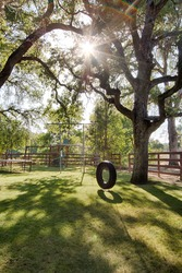 Tire Swing Hangs From Tree with Kids' Jungle Gym in Background and Lens Flare Through Trees