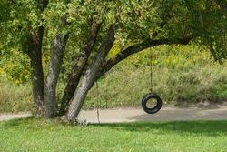 Tire Swing on Tree