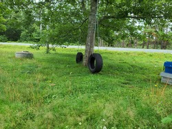 Tire swings hanging from a tree above a lawn. They are held in place with green fishing rope and are in front of a circular sewer lift.