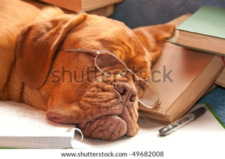 tired dog sleeping over a finished report