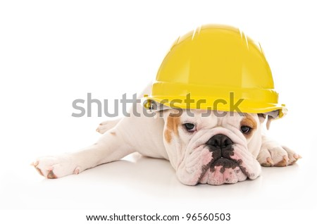 Tired Lazy Bulldog Wearing a Yellow Construction Hard Hat
