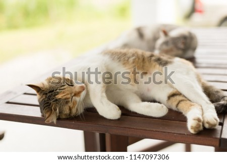 tired little cat doze and sleep in the outside