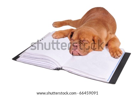 Tired puppy fall asleep lying on documents folder, isolated