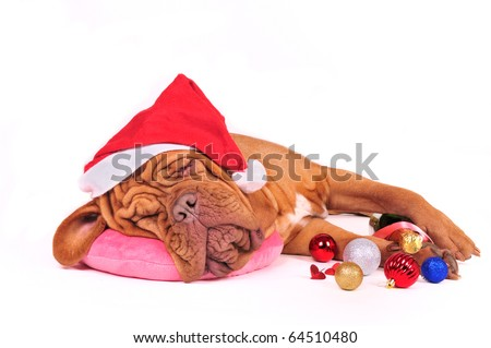 Tired Santa Dog decided to have some rest