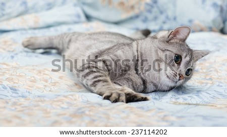 Tired young cat on a sofa, curious cat, kitten, cat on a sofa