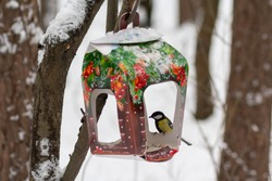 Tit and the feeder in a winter park. Bird