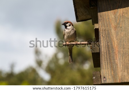 tit on perch in front of the entrance to a birdhouse ストックフォト ©