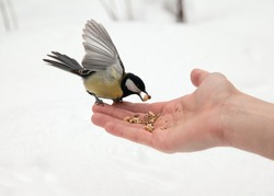 Tit. Open hand and titmouse