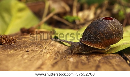 title - A long way to go..  a macro of a snail with its broken shell..