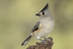 titmouse perched on a branch