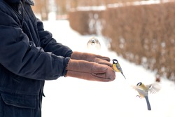 titmouses eat seeds from human hands, care for wild birds in winter, feed birds in cold weather