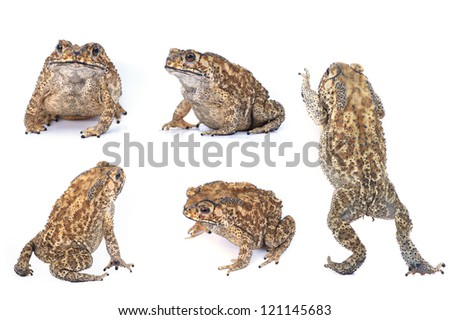 Toad Collection