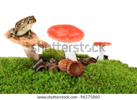 Toad in Mossy Mushroom Landscape