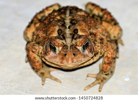 Toad is a common name for certain frogs, especially of the family Bufonidae, that are characterized by dry, leathery skin, short legs, and large bumps covering the parotoid glands.