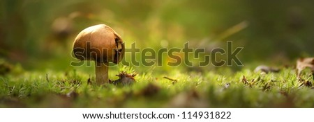 toadstool against a soft natural background in early morning light