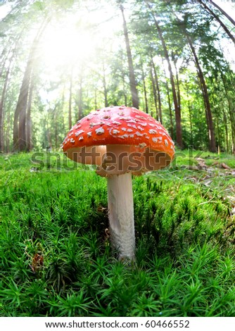 toadstool in forest