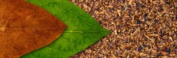 Tobacco dry leaf and tobacco green leaf on Tobacco dry banner background, copy space, text place