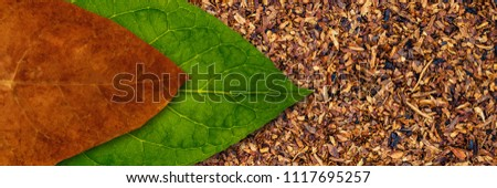 Tobacco dry leaf and tobacco green leaf on Tobacco dry banner background, copy space, text place Stock photo ©