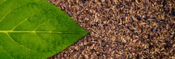 tobacco green leaf on Tobacco dry background. Tobacco macro banner close up