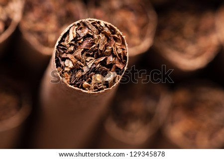 Tobacco in brown cigarettes close up