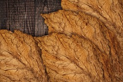 Tobacco leaves on wooden background, close up. High quality dry tobacco  big leaf, macro close up