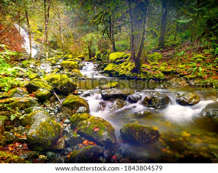 Todd Creek's Late Fall Landscape Series-Stunning scenery at Todd Creek small cascade waterfall seen through mossy rocks and trees wet from the fall rain 01. Stock fotó ©